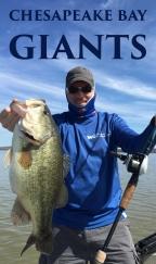 Keys to unlocking GIANTS in the Upper Chesapeake Bay!